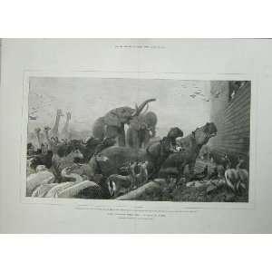 GodS Covenant Noah Ark Animals 1876 Elephant Fowl Cows