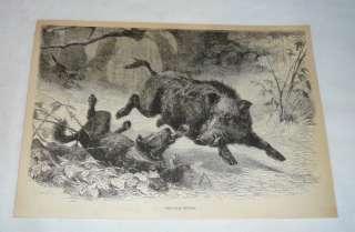 1876 engraving ~ WILD BOAR HUNTING