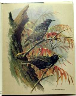 Birds of Town and Village; superb bird art by Basil EDE text by W.D