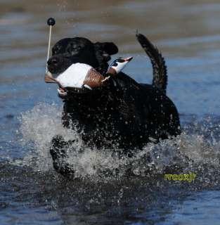 AVERY GREENHEAD GEAR GHG ATB WOOD DUCK EZ BIRD DOG TRAINING DUMMY