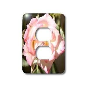 Patricia Sanders Flowers   soft pink rose   Light Switch