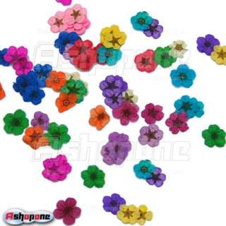 60pcs 12 Color Dried Dry Flower Nail Art Tips Decoration Manicure