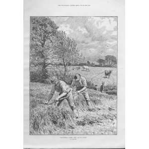 June Mowing Clover By King Fine Art Antique Print