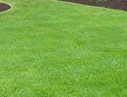 4KG GRASS SEED MIX HARDWEARING BACK LAWN SEED FREEPOST