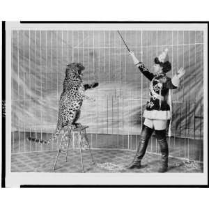 performers,women,employment,cages,costumes,c1906